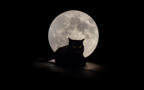 Картинка кошка, глаза, фон, луна