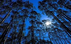 Обои солнце, небо, свет, деревья