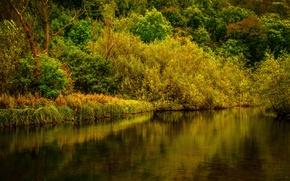 Картинка осень, лес, деревья, река, Великобритания, Derbyshire