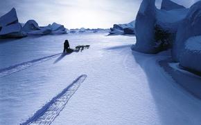 Обои снег, собаки