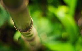 Картинка бамбук, размытость, Стебель