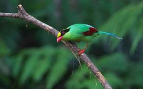 Обои перья, краски, ветка, зелёная цисса, хвост, птица, клюв