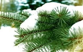 Картинка зима, снег, ветки, Елка, winter, snow