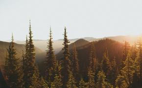 Картинка лес, свет, горы, утро