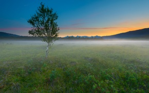 Обои утро, поле, дерево, туман, природа