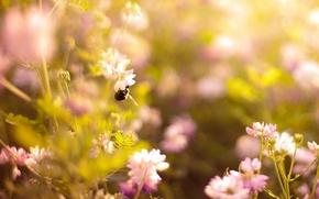 Картинка лето, солнце, свет, цветы, природа