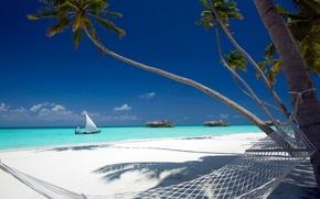 Картинка тропики, пальмы, океан, гамак
