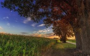 Картинка поле, небо, облака, деревья, кукуруза
