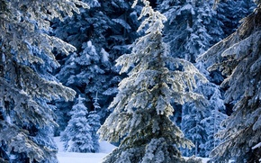 Картинка forest, winter, frosty, frosty trees
