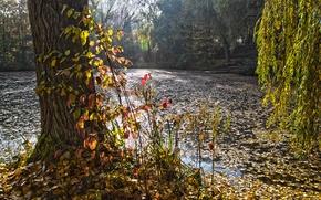 Обои парк, лес, пруд, озеро, осень
