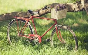 Картинка зелень, лето, трава, мечта, свобода, радость, цветы, красный, велосипед, велик, дерево, настроение, романтика, рама, весна, …