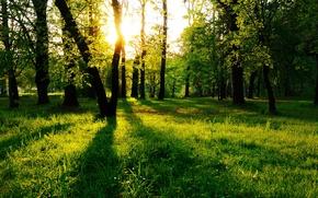 Картинка лес, трава, деревья