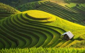 Обои холм, поле, плантации, природа