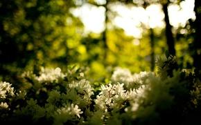 Обои цветы, лес, природа