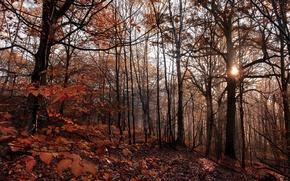 Картинка лес, листья, солнце, деревья, вечер, forest, trees, leaves, evening, sun