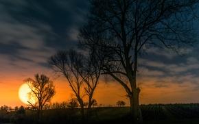 Картинка поле, небо, солнце, облака, деревья, закат