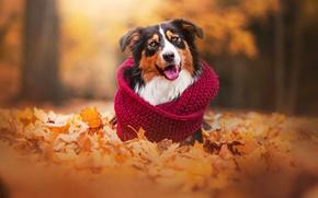 Обои друг, осень, собака