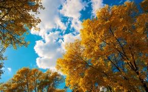 Картинка осень, небо, листья, облака, деревья, крона