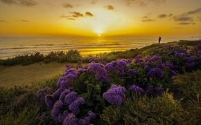 Картинка закат, цветы, океан, побережье, Калифорния, Pacific Ocean, California, Тихий океан