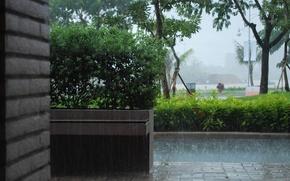 Картинка природа, город, дождь