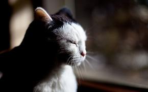 Картинка кот, сидит, размышляет