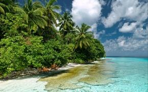 Картинка море, небо, вода, прозрачность, природа, пальмы, мальдивы, кусты, индийский океан, Южный Мале, Kaafu