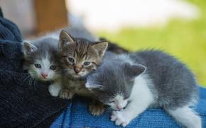 Картинка взгляд, фон, котята, малыши
