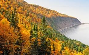 Обои лес, осень, берег, море, небо, пейзаж