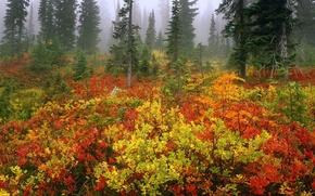 Обои осень, лес, туман