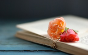 Картинка цветы, фон, обои, роза, книга, цветочки, книжка, страницы, wallpapers