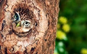 Картинка дерево, сова, дупло, птиц
