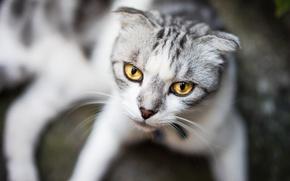 Картинка кошка, глаза, усы, взгляд