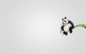 Картинка дерево, животное, минимализм, ветка, панда, сидит, кушает, panda