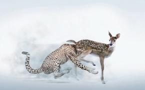 Обои юмор, леопард, Олененок, тормоз