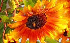 Картинка цветок, природа, пчела, лепестки, насекомое