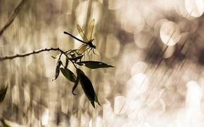 Картинка листья, блики, ветка, стрекоза