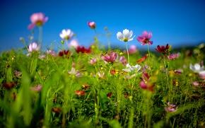 Обои лето, макро, цветы, природа