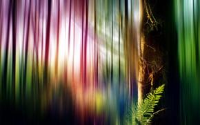 Картинка стиль, фон, дерево, цвет, форма