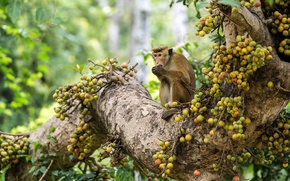 Картинка взгляд, обезьяна, природа