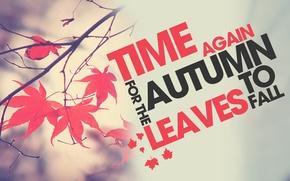 Картинка осень, листья, ветка, время года, Time to Fall