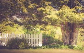 Картинка summer, tree, fence, sunlight, sunny, backyard