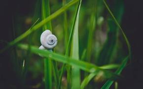 Картинка трава, природа, улитка