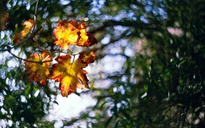 Картинка размытие, свет, листья