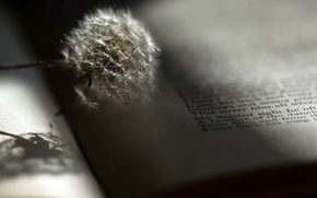 Картинка фон, одуванчик, книга