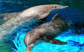 Картинка море, брызги, дельфин, игра, бассейн, пара