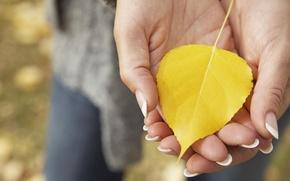 Картинка осень, макро, желтый, лист, руки, опавший, ладони