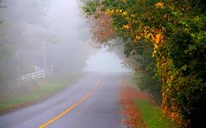 Картинка парк, дорога, leaves, fall, листья, path, colors, trees, walk, осень, лес, park, forest, природа, деревья, ...