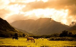 Обои лошади, горы, лужайка