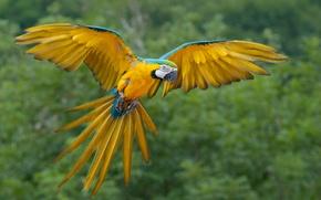 Картинка попугай, кеша, африканский, попка дурак