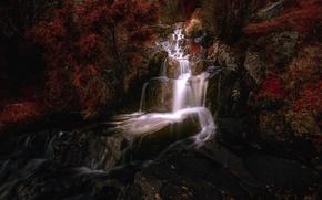 Картинка деревья, водопад, Норвегия, каскад, Norway, Ругаланн, Rogaland, Бьеркрейм, Bjerkreim